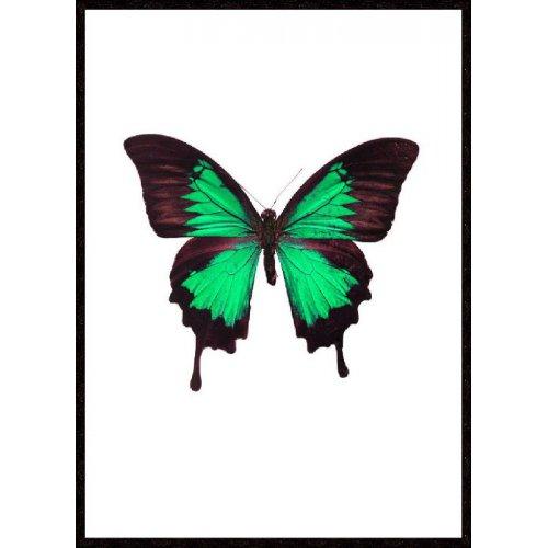 Obraz INSECT PAPILLON INS046104 50x70cm